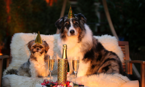 Успеть до Нового года: какие продукты подорожают к праздникам
