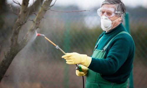 Когда и чем обрабатывать деревья весной от вредителей: эксперт дал ответ