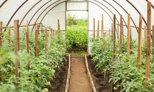 Как улучшить почву в теплице: хитрости для плодородия
