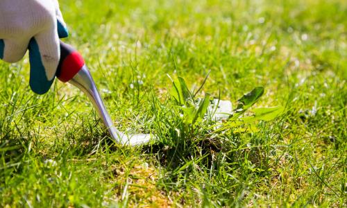 Как очистить огород от сорняков: 10 эффективных способов