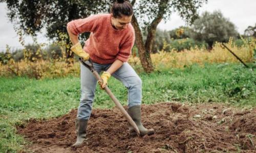 Нужно ли перекапывать огород осенью: советы дачникам