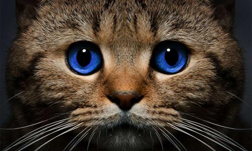 Кошачьи праздники: самые мурлыкающие фестивали в мире